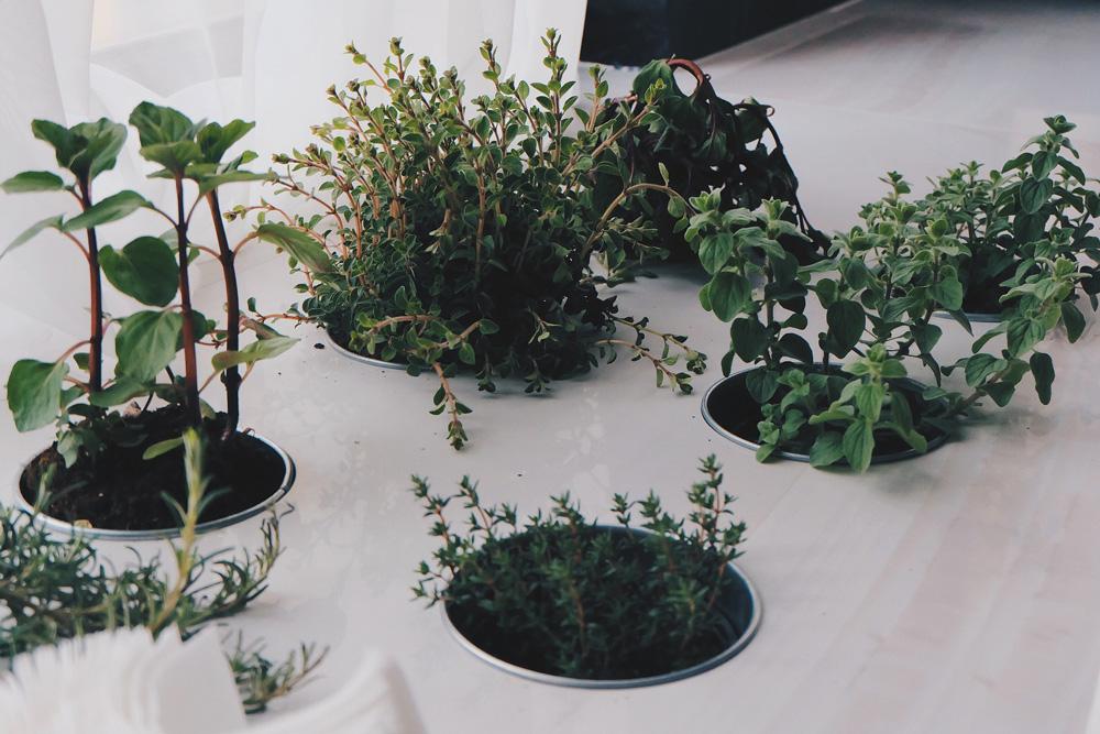 Indoor plant growing