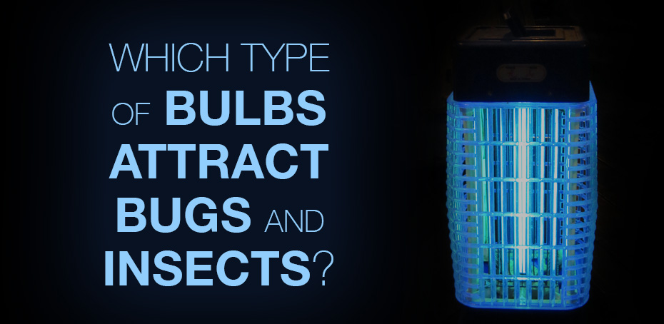 Which Type Of Bulbs Attract Bugs And Insects Ledwatcher